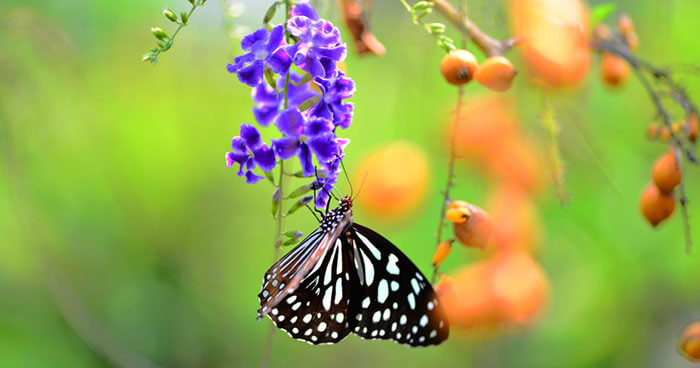 This magic is the long tongues of butterflies and the flowers that welcome them.