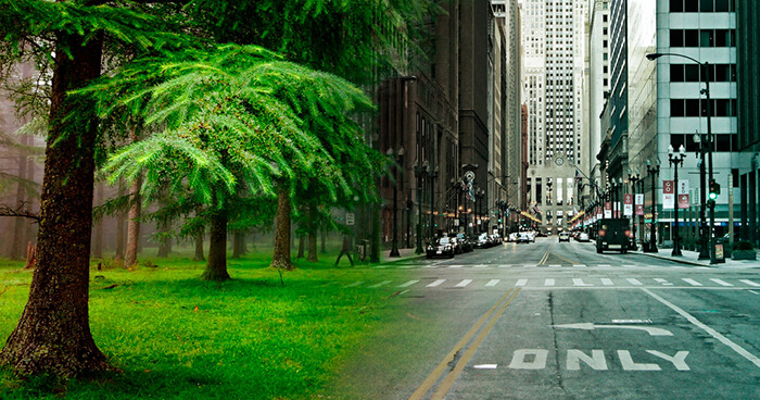 City design with nature in mind