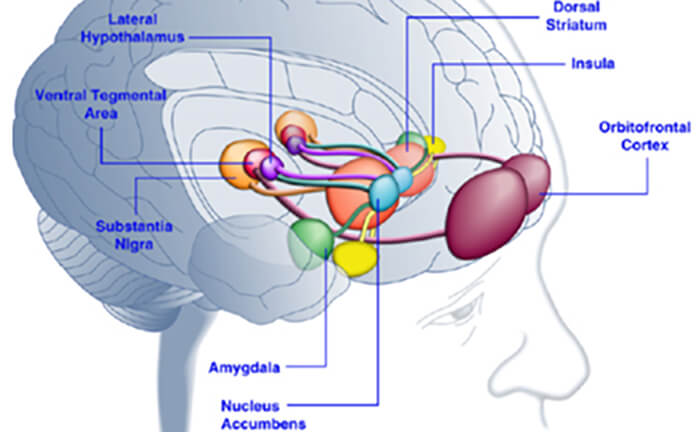 The Amygdala is a mass of grey matter inside each cerebral hemisphere, involved with the experiencing of emotions.