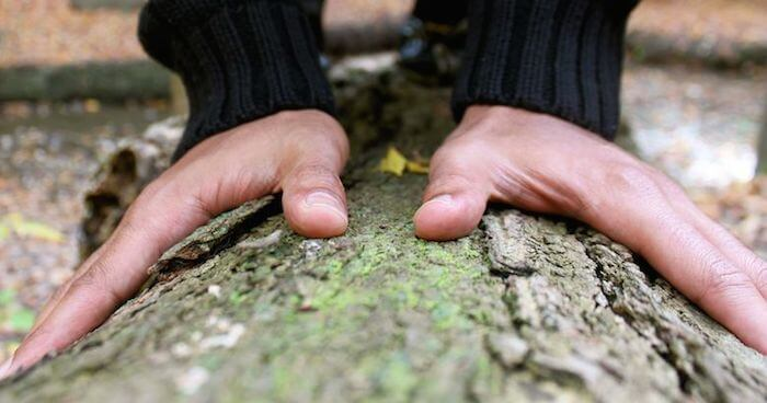 Greening self touching tree