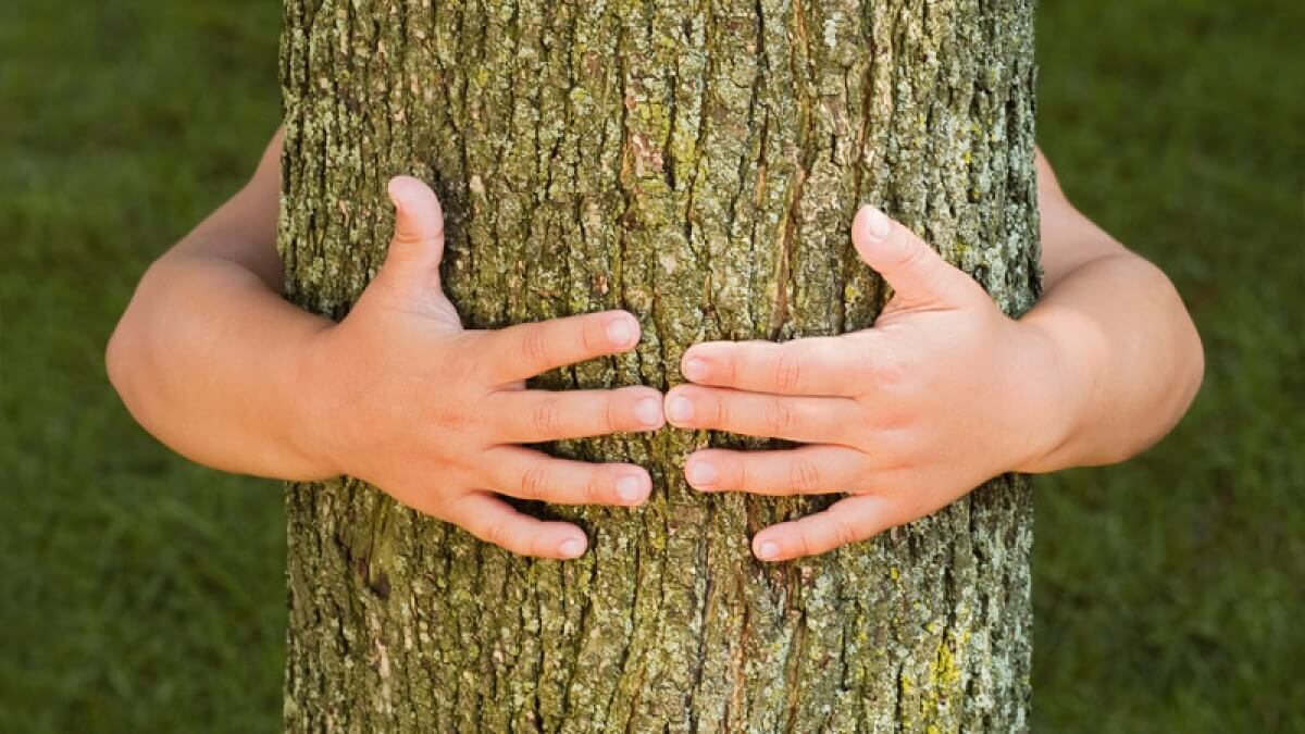 Hugging a tree can release negative energy from the body