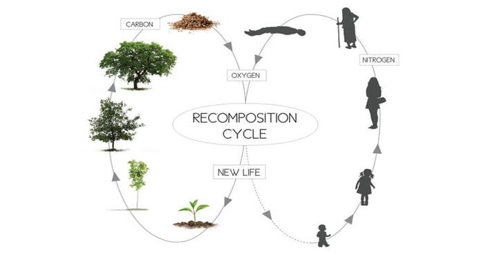 Recomposition Cycle