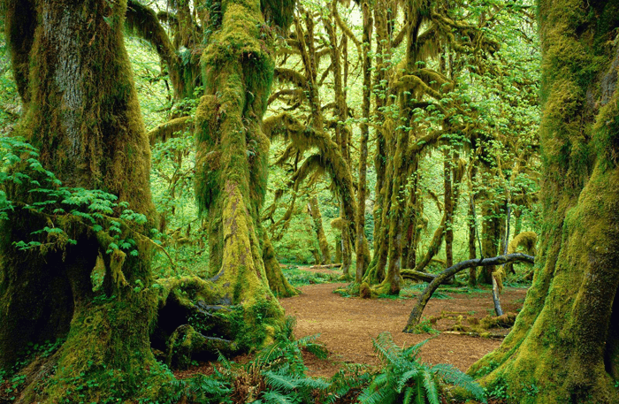 Olympic National Park Wilderness