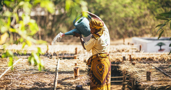 Tree planting locations