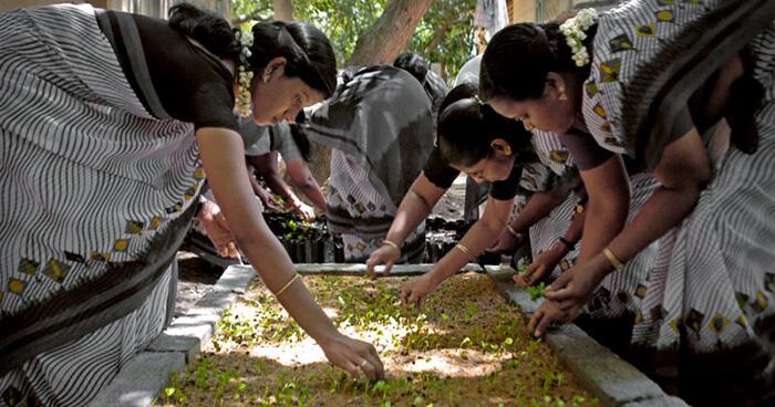 Feminine empowerment and reforestation