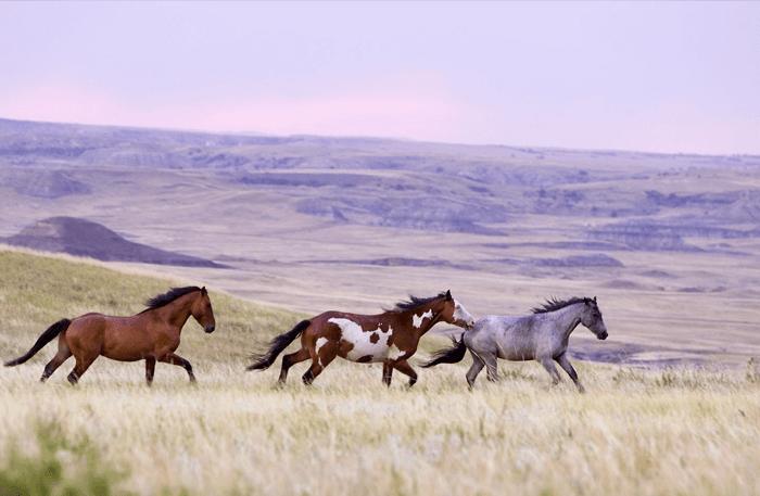 Horses running wild