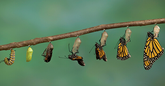 Transformation can take time