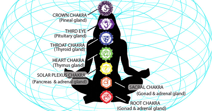 Chakras and their glands