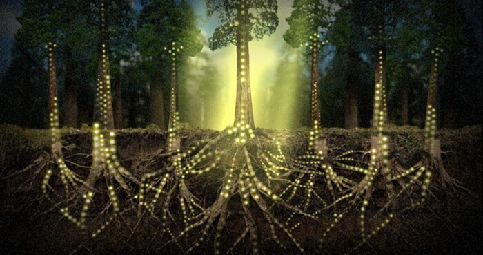 Root-to-root alerts could transform a forest into an organic switchboard