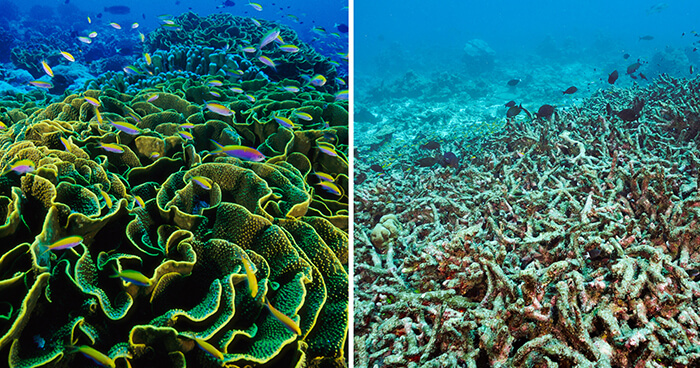 Coral before and after