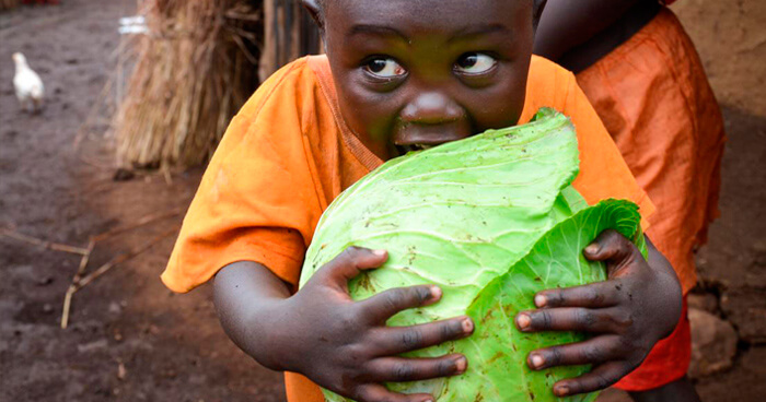 Child holding cabbage