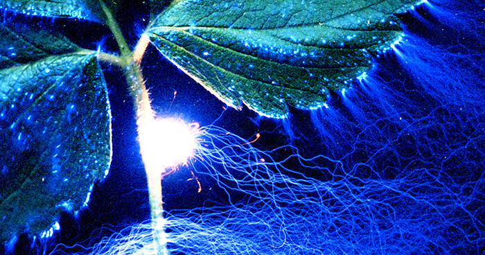 Chemical signals from leaves