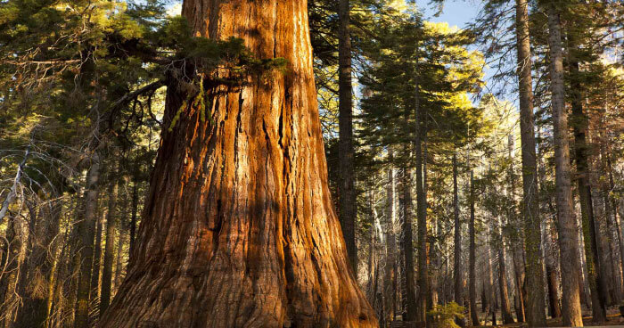 Encountering the redwoods
