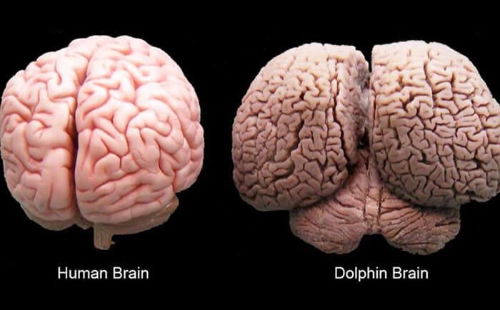 Does brain size matter?