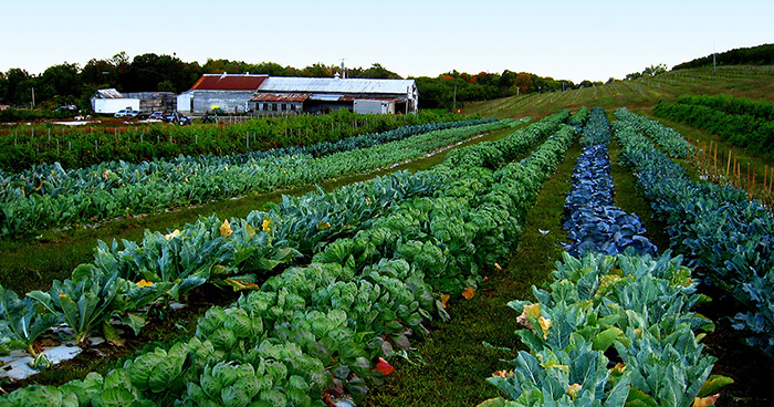 Sustainability depends on the specific farming methods