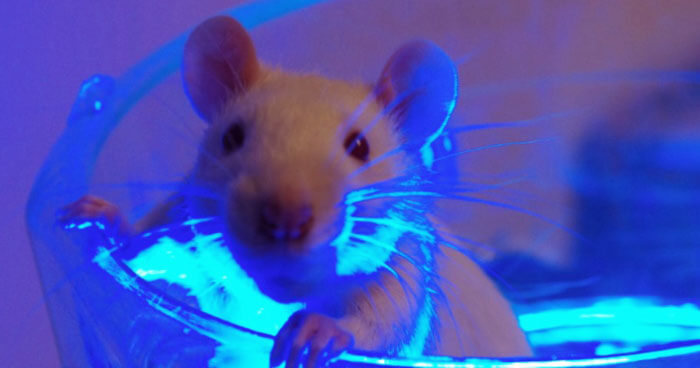 Mice light experiment