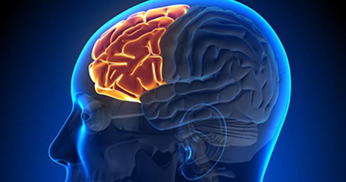 The pre-frontal cortex - the centre of consciousness.