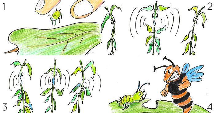 Plants communicating