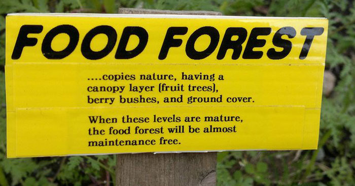 Food forests copy nature