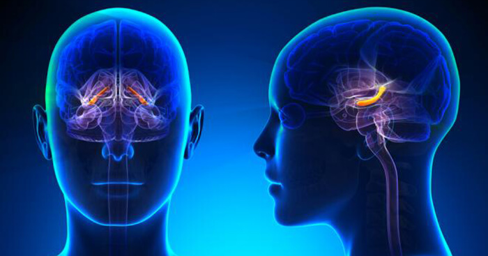 Your brain's memory center (hippocampus) is particularly adaptable and capable of growing new cells