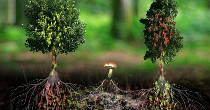 A web of mycelium