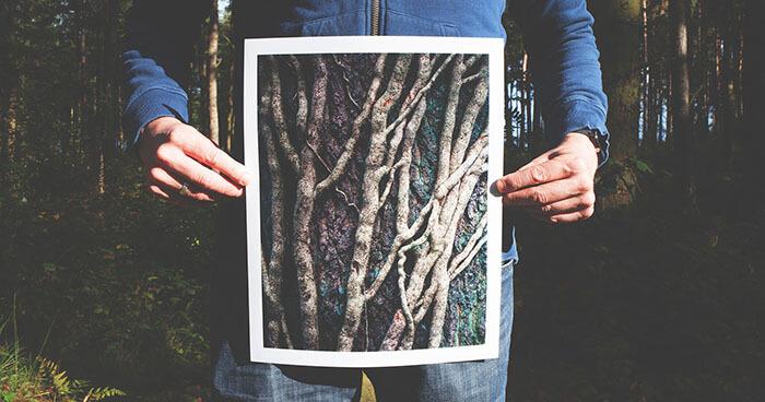 Trees communicate over vast distances