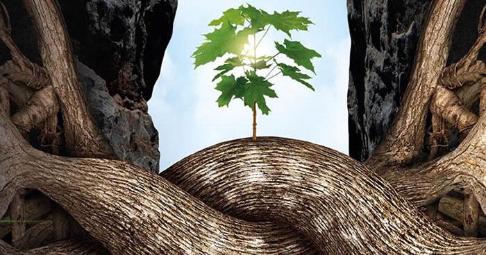 Self-healing trees