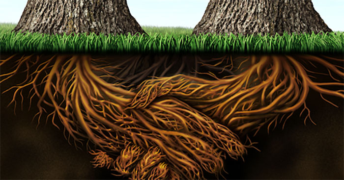 Trees communicate with each other below the ground