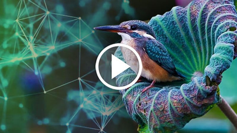 BiomimicryFeature