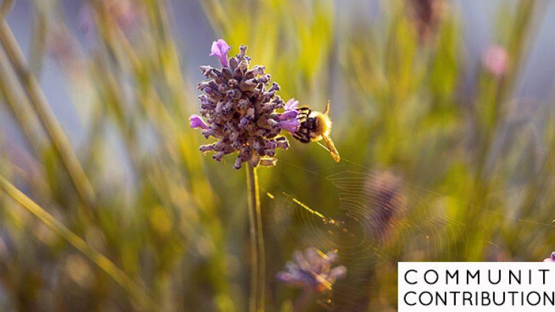CCbeeSpiderButterfly