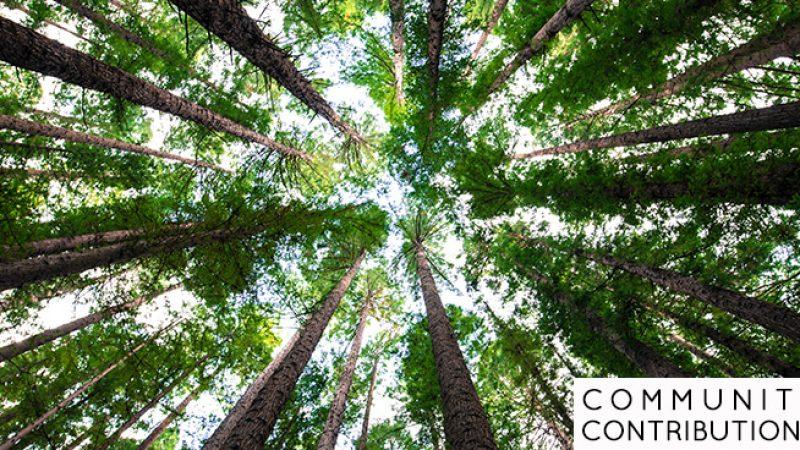 CCglobalRegenerationTrees