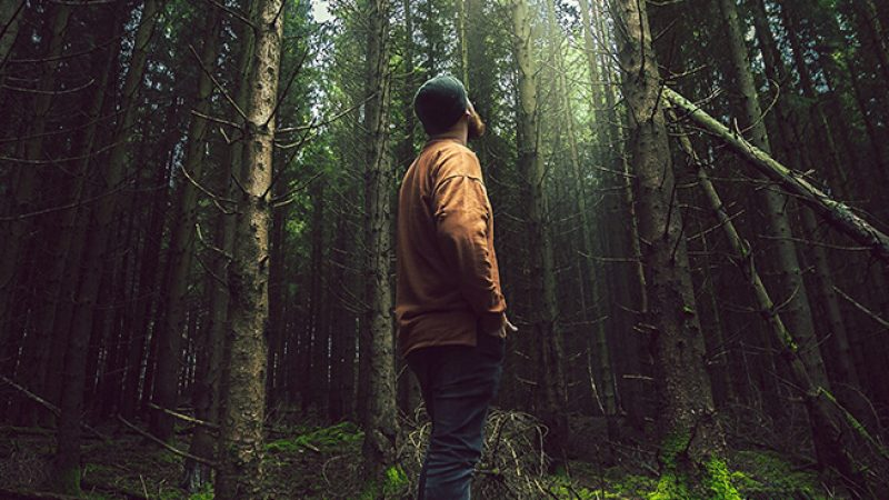ForestBaithing