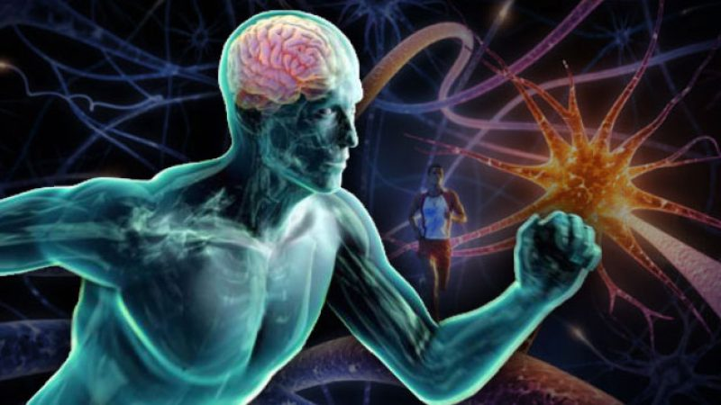Exercise and the Brain