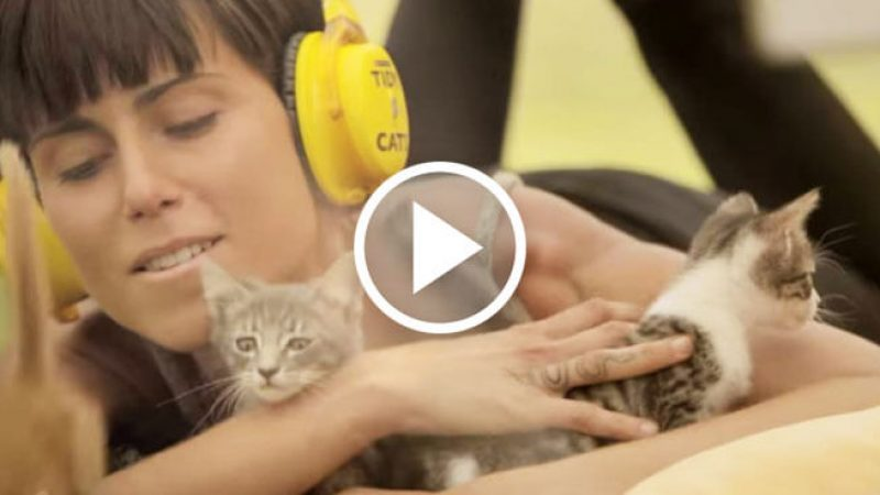 kittens-feature-with-button